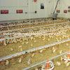 높은 Quality Automatic Poultry Feeding 및 Chicken를 위한 Drinking System