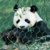 Acoplamiento de la cuerda de alambre de acero inoxidable 2016 para los animales del parque zoológico