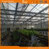 네덜란드 기술 자동 환경 통제 유리 온실