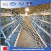 De Kooien van het Gevogelte van de Laag van de batterij (bdt036-jf-36)