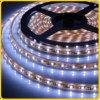 IP68 impermeabilizzano il nastro della flessione LED con 3528 SMD