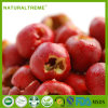 Pure Natural Hawthorn Berry Extract Powder