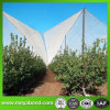 100%Virgin HDPE Apple Tree Anti Hail Net con Protection UV