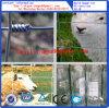 Pecore/azienda agricola/campo/rete fissa galvanizzati della rete metallica dei cervi!