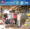 Pollo al por mayor de la batería de Atomatic del diseño de la casa de la granja avícola de la parrilla de China