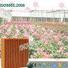 Cooling évaporatif Pad pour Greenhouse et Farms 5090
