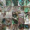 Pauaの貝のモザイク・タイル(ALT-SQ15)
