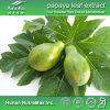 Polvo del extracto de la hoja de la papaya de la alta calidad