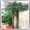 Palmeira diferente de Type Artificial Fern em Hot Sale