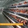 Camada que eleva o equipamento na gaiola de galinha de aço para galinhas poedeiras