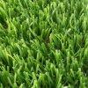 ヨーロッパの市場の人工的な草の人工的な芝生の人工的な泥炭