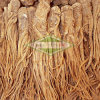 Extracto de la planta de raíz de la angélica