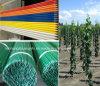 Palo ad alta resistenza della pianta, palo del giardino, FRP Rod&Stake