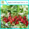 Wasserkultursystem für Gemüse
