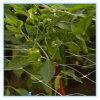 Qualitäts-Plastikpflanzen, die Stützineinander greifen-Filetarbeit klettern