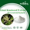 高品質の巨大なKnotweed 98% Polydatinの粉