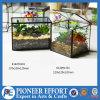 プラントホールダーおよびホーム装飾のためのガラス陸生動物飼育器