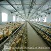 Оборудование цыплятины клетки цыпленка для слоев