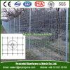 Bestiame della rete metallica e rete fissa annodati dell'azienda agricola
