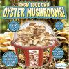 Dunecraft растет ваш собственный гриб устрицы