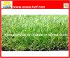 Populärer grüner Rasen (N4SA1830B)