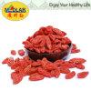 Baya china orgánica de Wolfberry Goji del níspero