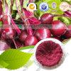 Nahrungsmittelgrad-Pigment-rote Rüben-Wurzel-Puder