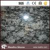 Brames blanches de granit de jet Polished pour la tuile