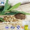 Aceite del cardamomo del aceite de semilla del cardamomo con la muestra libre
