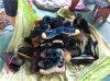 Продавать Hotest и сортированные используемые летом ботинки второй руки ботинок и используемые мешками ботинки