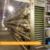 Matériel de fermes de poulet/cages de batterie automatiques de couche de poulet d'oeufs