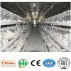 Cages de poulet à rôtir dans la Chambre de volaille pour le poulet avec le prix bas