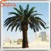 Árvores artificiais da planta da palma de data da decoração do jardim