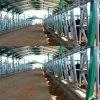 Headlock do gado do equipamento de exploração agrícola da fabricação
