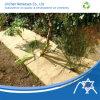 Spunbond Nonwoven Fabric pour Landscape Cover