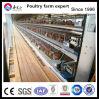 Cage automatique de poulet de couche de matériel de poulet