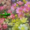 Réseaux 100% d'insecte de serre chaude de HDPE de Vierge anti