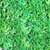 Hierba plástica protegida ULTRAVIOLETA