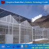 ブドウのための商業Hydroponicパソコンシートの温室