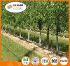 Protetores Unidade-UV da árvore do protetor da planta da planta Protetor/PP/planta