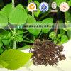 순수한 자연적인 나물 약 근원 Rubiae Munjeet Qian Cao