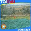 A anti saraiva pesca a rede verde para a colheita verde-oliva
