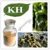 Het hete Verkopen van Fucoxanthin, het Uittreksel van de Bruine Alge