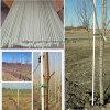 Высокопрочный Durable FRP/GRP/Fiberglass Rods&Stake