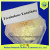 Pó esteróide cru 10161-33-8 USP Parabolan/Trenbolone Enanthate de 99%