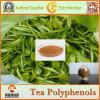 Fabrik-Zubehör-natürliche grüner Tee-Auszug-Tee-Polyphenole