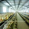 Equipamento de cultivo automático das aves domésticas para grelhas e camadas
