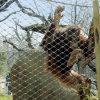 Загородка клетки Orangutan, приложение шимпанзеа, загородка гориллы (ss 304, 316L)