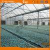 Invernadero de la película plástica con la base del Seeding