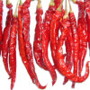 Nuovi peperoncini rossi rossi caldi secchi di buona qualità del raccolto